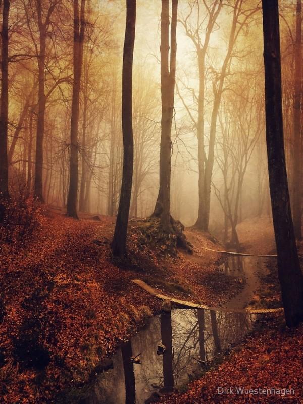 Forest Creek @ Sunrise in Fall by DyrkWyst