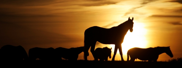 Sunset silhouette with grazing horses