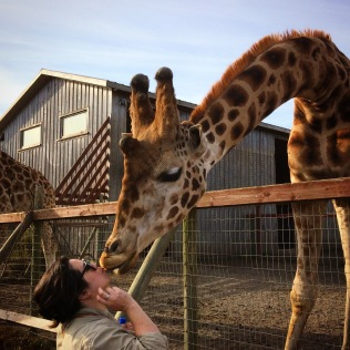 kissing a giraffe at b bryan preserve